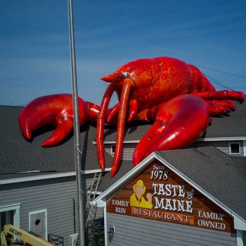 Larry-the-Lobster.jpg-1.jpg